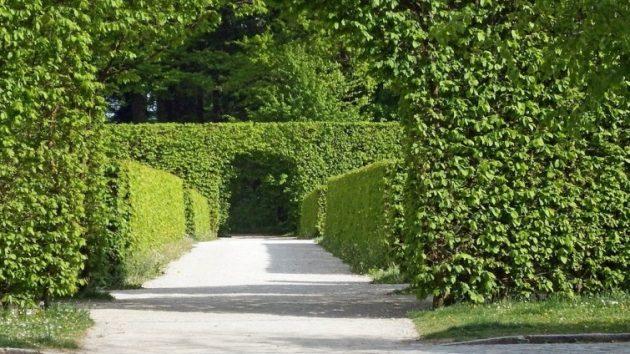 hedge-630x354