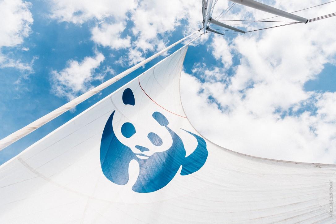 WWF Blue Panda (2)