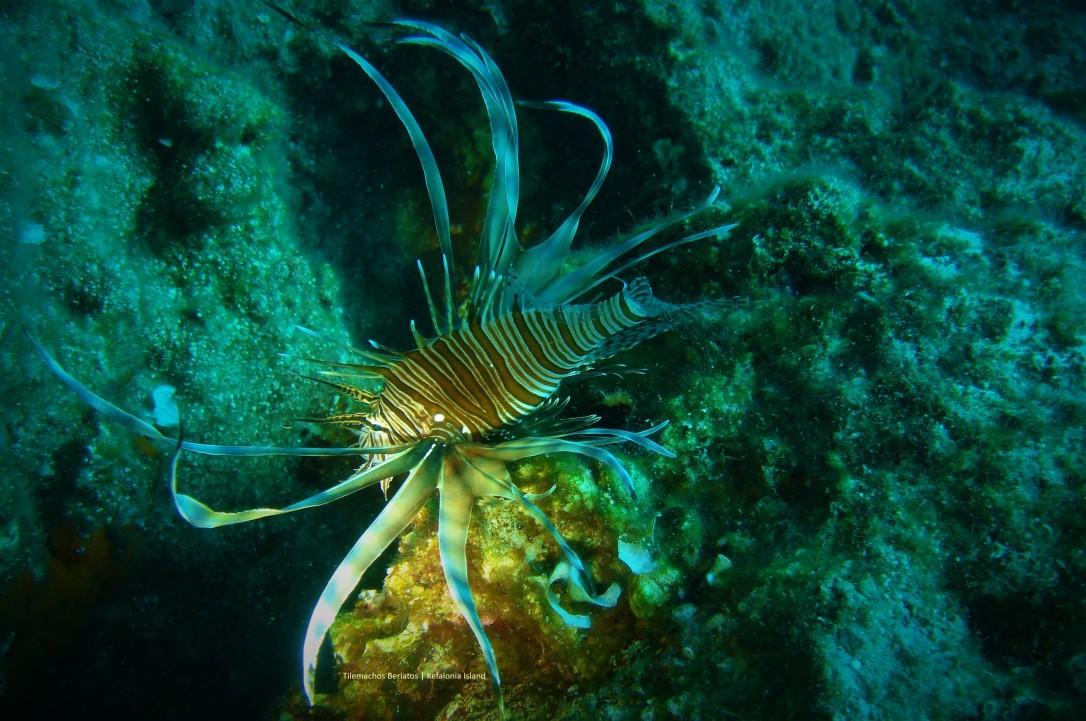 Lionfish ++